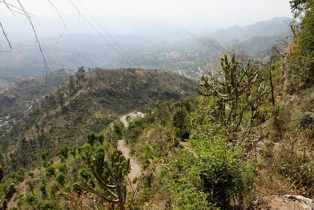 arki himachal pradesh