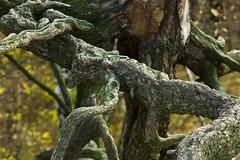 06XR Odhalené kořeny Biometar 2_8 120