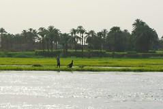 النيل (Nile)