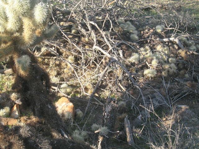 Nest Oitdoor Dog Breeds