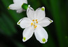 Lily of the Valley by Woolmarket100