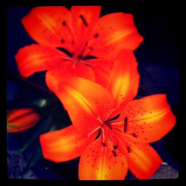 A Flower @Gunpo, 2011