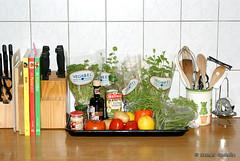 dieta bialkowa a pieczywo