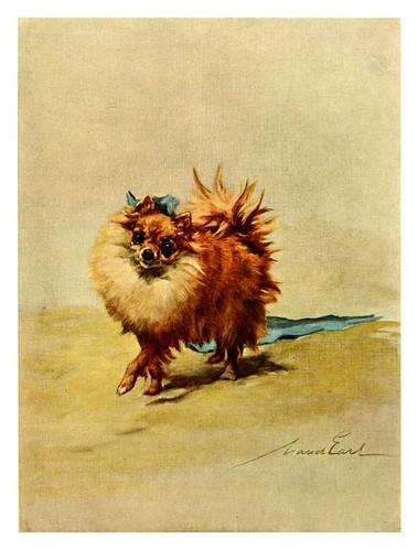 018-Pomeranian miniatura-The power of the dog 1910- Maud Earl