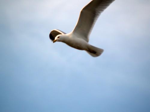 airport michigan seagull aviation grr viewingarea geraldrfordinternationalairport cascadetownship