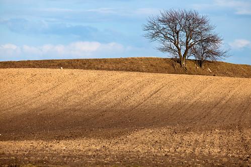 brown tree field skåne spring sweden sverige 2010 f40 fav10 villie canoneos5dmarkii ¹⁄₁₆₀₀sec skånelän
