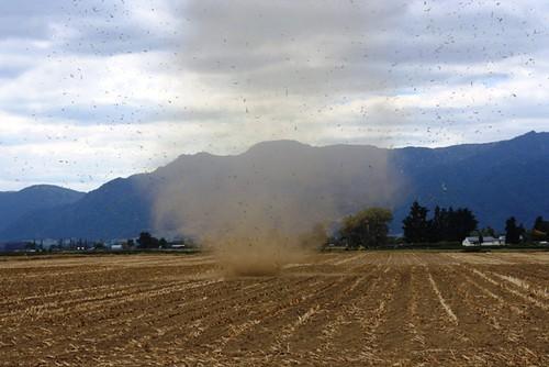 Whirlwind on Hauraki Plains