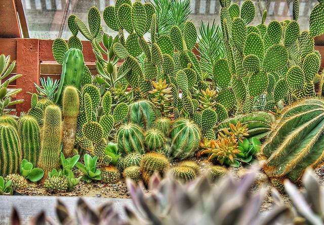 Image Result For Lins Garden