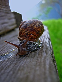 The Lonely Snail