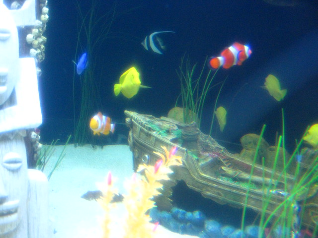 Moa aquarium finding nemo tank flickr photo sharing for Finding nemo fish tank