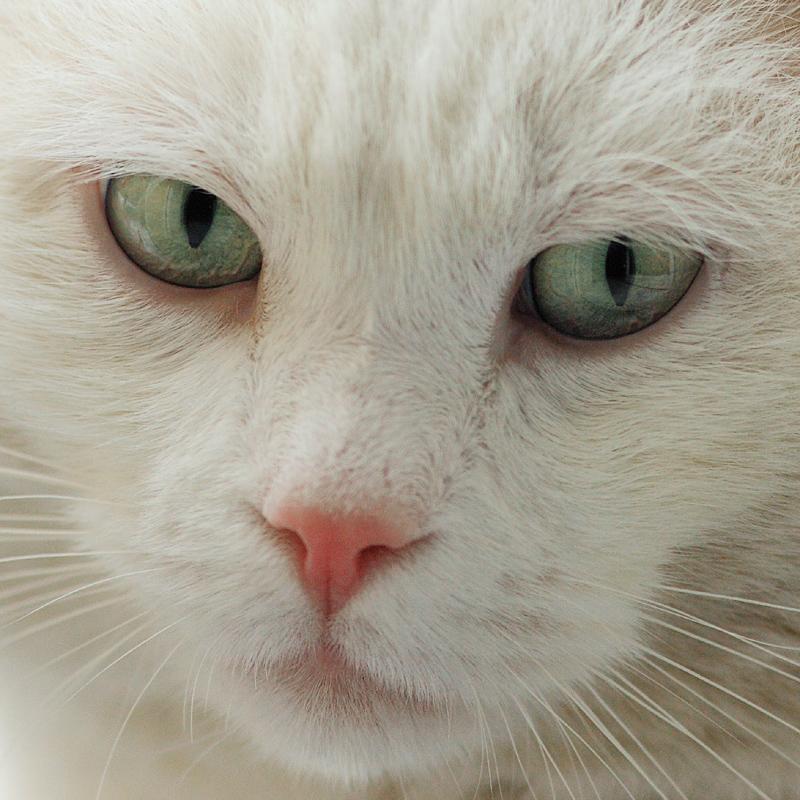 Cat Closeup Sunday (#1-Eisbär)