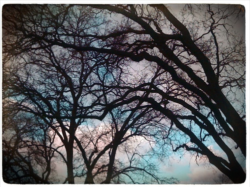 california trees winter abstract color clouds landscape outdoors iphone
