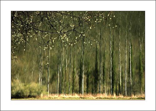 "reflection et fleurs by ""berend"""