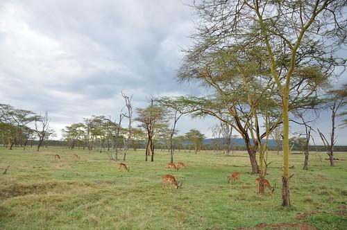 africa sunset elephant animal animals sunrise guepard monkey big cattle kenya five nairobi flamingo marabout lion safari leopard mara rhino zebra cheetah giraffe baboon animaux gazelle nakuru masai maasai savanah topi dikdik flamandrose afrique bigfive masaimara maasaimara giraf savane babouin antilop papacroixrouge tomlechat
