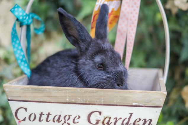 Easter egg hunt printables