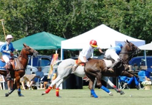 Barrington Hills Horses