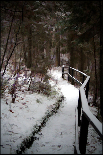 Early Winter on the Nature Trail