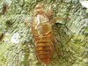 Kulit Serangga