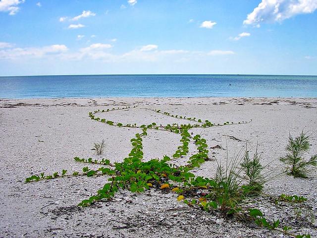 Lovers Key Beach Club Resort Reviews