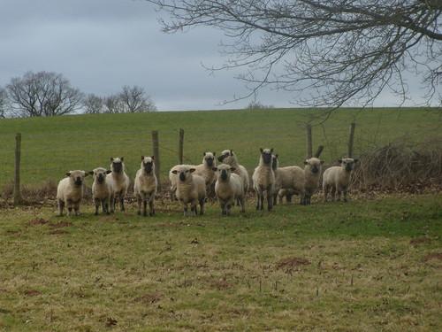 As ewe were