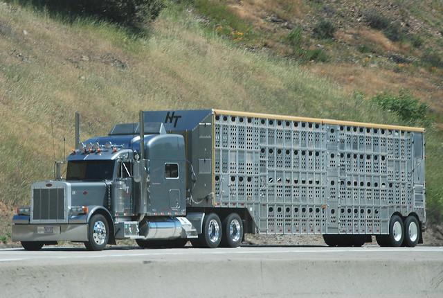15935831363 besides Dodge Aluminum Truck Bumper Truck Defender moreover Search moreover Bryan Jollys 2004 Peterbilt 379 also Watch. on custom semi cattle trucks