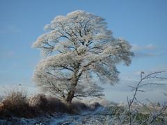 Hoar frost, Stourbridge,  22nd December 2009