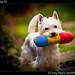 Maky the dog (2)
