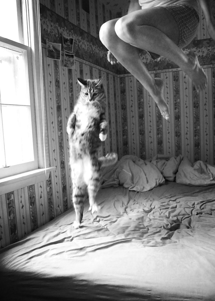 ETC INSPIRATION BLOG ART DESIGN FOOD INTERIOR DESIGN CUTE JUMPING CAT PHOTO okay… by leslie m k, on Flickr