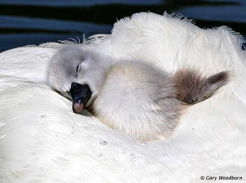 My name is......Sleepy