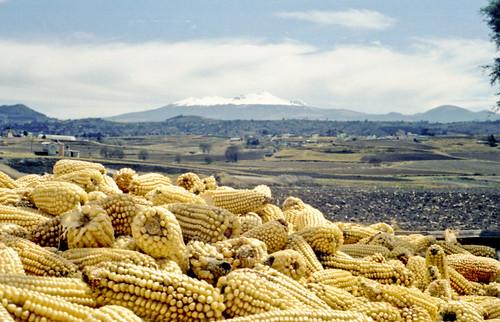 minolta amarillo jae toluca maiz nevado maxxum abuelo estadodemexico deforestacion almoloya