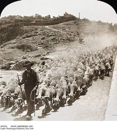 Rebaño de ovejas entra a Toledo cerca del Puente de San Martín en 1908