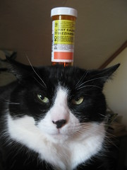annoyed cat with pill bottle on head