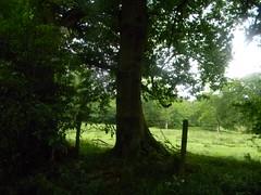 Tree sihouette