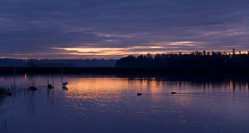 morning sea water sunrise suomi finland geotagged duck swan helsinki purple sony alpha a700 tamron1750mm theunforgettablepictures alpha700 artofimages sautio geo:lat=60210748 geo:lon=24982712 theoriginalgoldseal