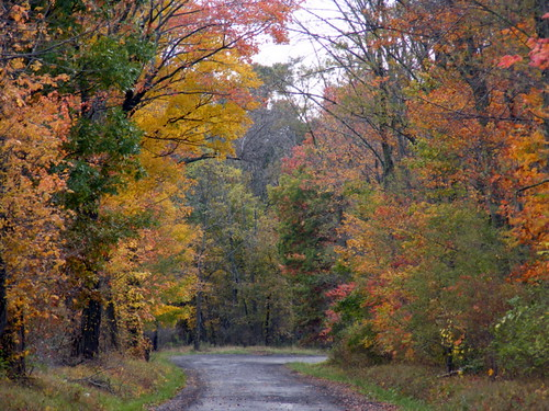 county autumn red orange tree fall colors leaves yellow gold md colorful maryland foliage countryroad midland allegany roadtonowhere bendintheroad squirrelneck javcon117 runroad frostphotos