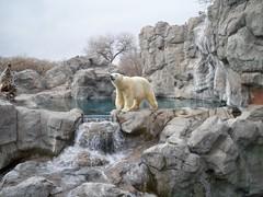 mountain goat(0.0), terrain(0.0), zoo(1.0), polar bear(1.0), wilderness(1.0), badlands(1.0), rock(1.0), wildlife(1.0),