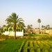 Small photo of Arabin agriculture village