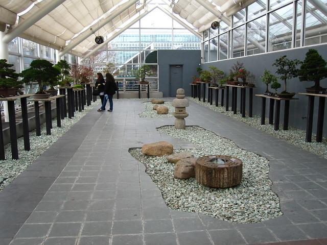 C.V. Starr Bonsai Museum