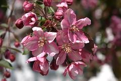 Flower Macro 5