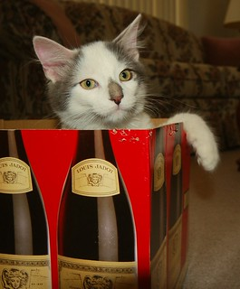 Stevie Want's to Thank Everyone Who Stopped by the Previous 7 Shots of My Most Excellent Wine Carton Adventures.