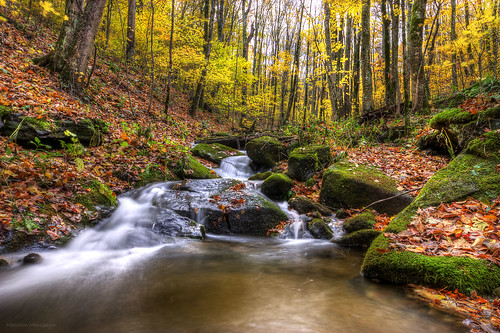 Roan Mountain Stream in Fall