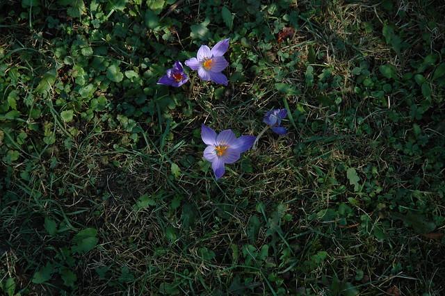 Krokanten : Flickr - Photo Sharing!