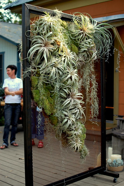 Air Plants On Display Flickr Photo Sharing