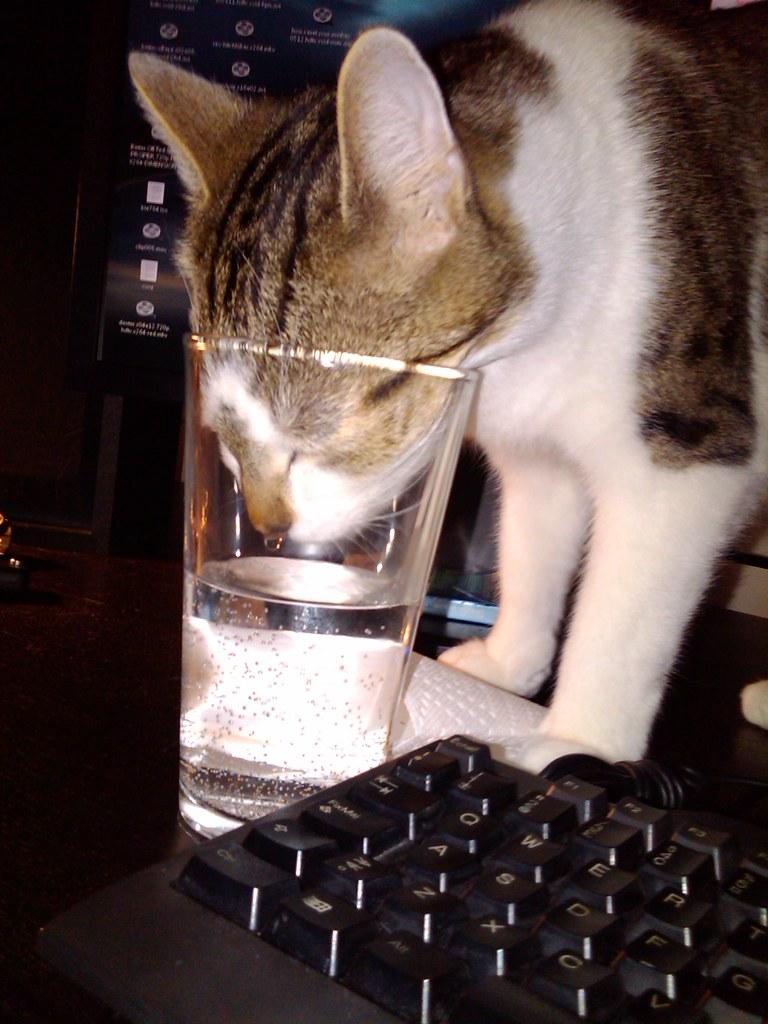Позитивные стаканы, кошки и всякие умные мысли