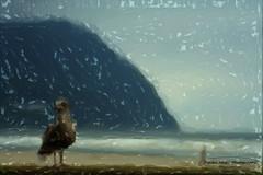 Orgeon Sea Gull