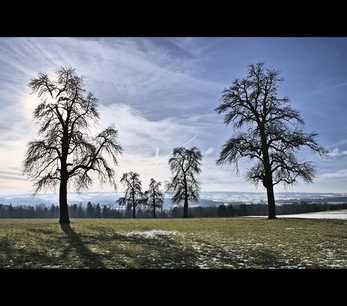 winter tree nature clouds landscape 1 schweiz switzerland countryside ast branch branches wiese wolken äste landschaft baum hdr cloudscape 2010 säuliamt ottenbach sonyalpha200