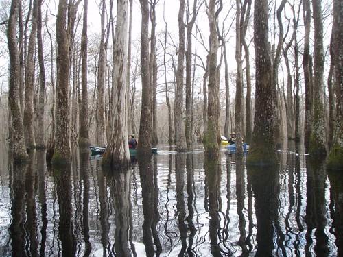 georgia unitedstates kayaking ebenezercreek 10kmnofrincon