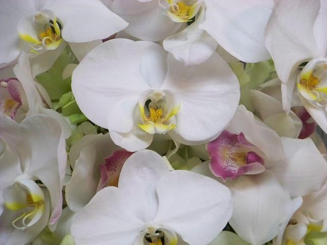 Cascading orchids wedding flower arrangements from Alan 39s Rumson Florist