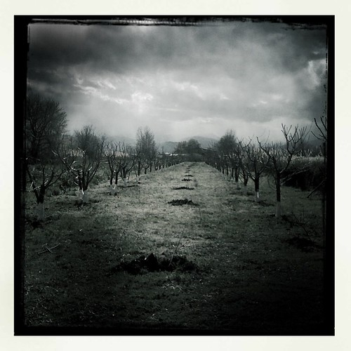 trees sky bw field clouds landscape cloudy iphone trikala