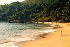 Sight for the Endangered Species in the Forest of Ilha Grande - Things to do in Rio de Janeiro